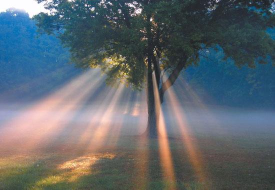 Reggeli bőség vonzó rituálé